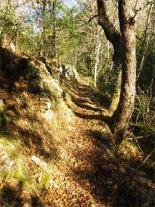 sabine lamarche - newsletter chemin chênes