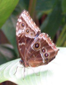 papillon-sur-l-envol
