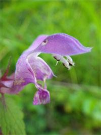 fleur-crochet-nmai13