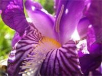 iris-nmai13