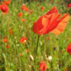 Canalisation du 8 avril 2012, jour de Pâques