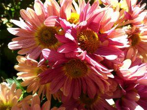 sabinelamarche-newsletternov16-fleurs-roses